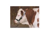 Хомут для коров с цепью